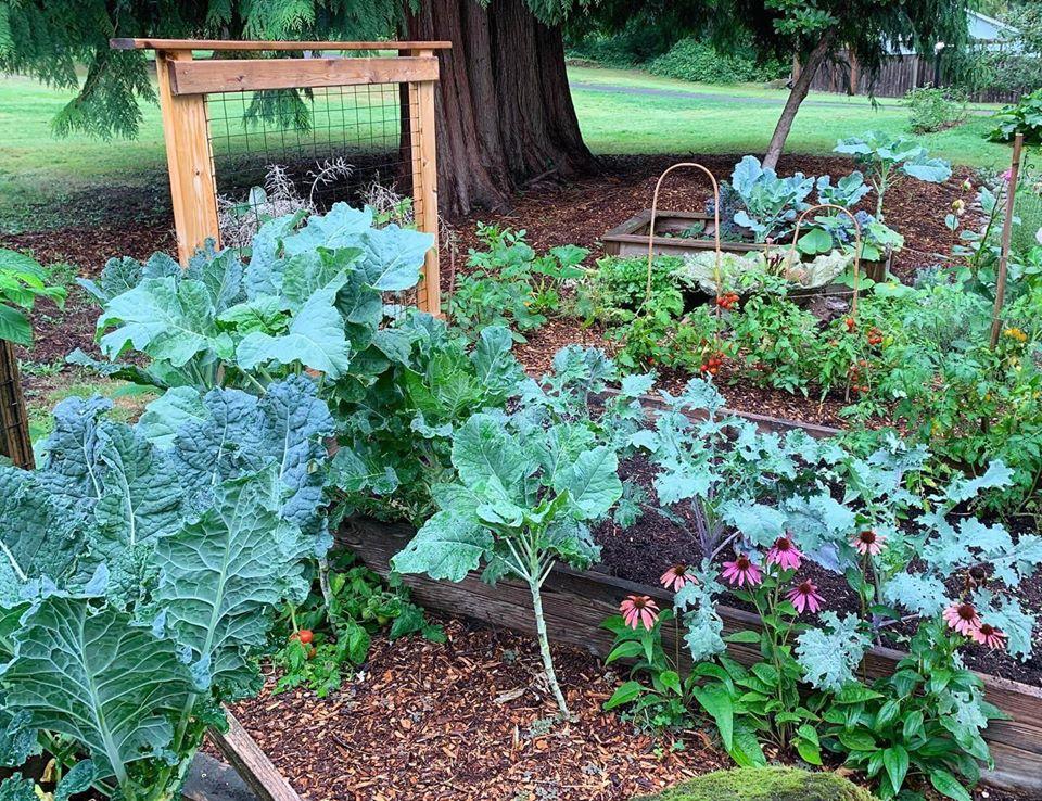Bà mẹ 4 con dành cả thanh xuân để tạo lập khu vườn trồng cây ăn trái cùng đủ loại rau xanh - Ảnh 15.