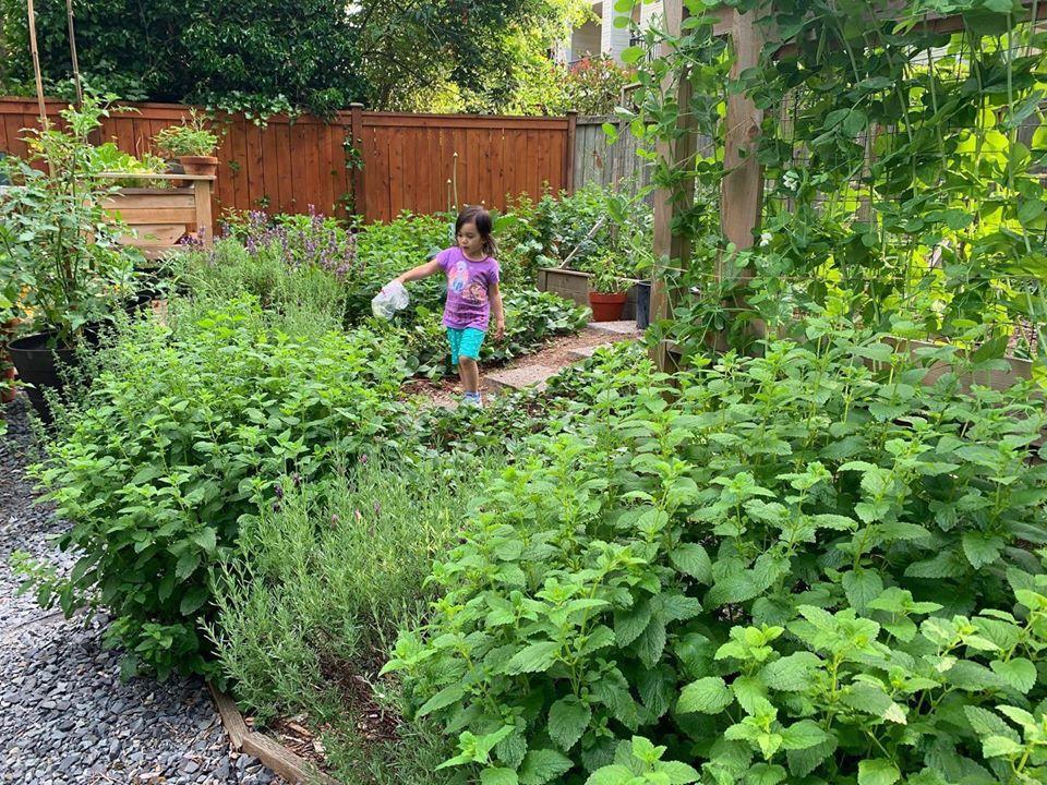 Bà mẹ 4 con dành cả thanh xuân để tạo lập khu vườn trồng cây ăn trái cùng đủ loại rau xanh - Ảnh 13.