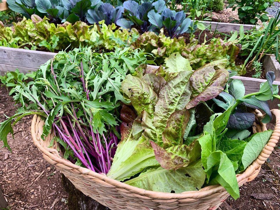 Bà mẹ 4 con dành cả thanh xuân để tạo lập khu vườn trồng cây ăn trái cùng đủ loại rau xanh - Ảnh 18.