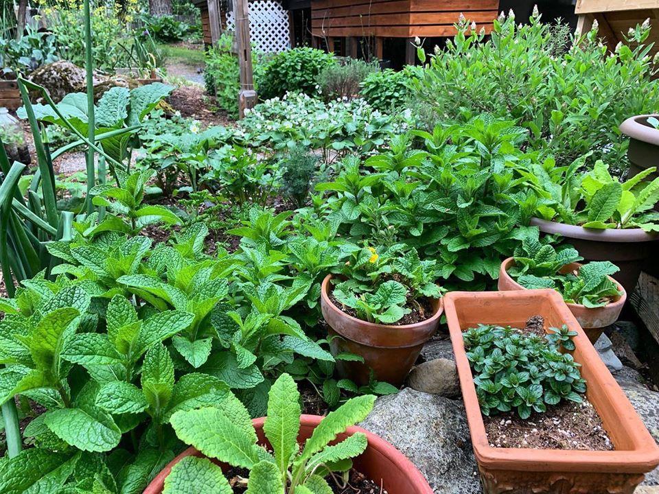 Bà mẹ 4 con dành cả thanh xuân để tạo lập khu vườn trồng cây ăn trái cùng đủ loại rau xanh - Ảnh 21.