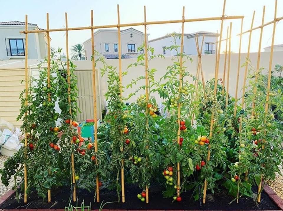 Vườn rau quả xanh um tươi tốt bố mẹ trồng giúp con gái nhỏ học nhiều điều về cuộc sống - Ảnh 13.