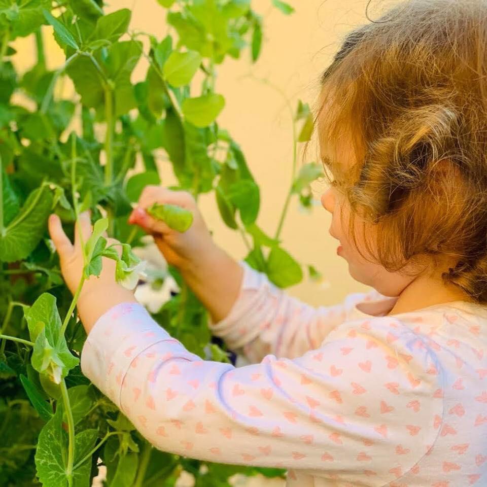 Vườn rau quả xanh um tươi tốt bố mẹ trồng giúp con gái nhỏ học nhiều điều về cuộc sống - Ảnh 15.
