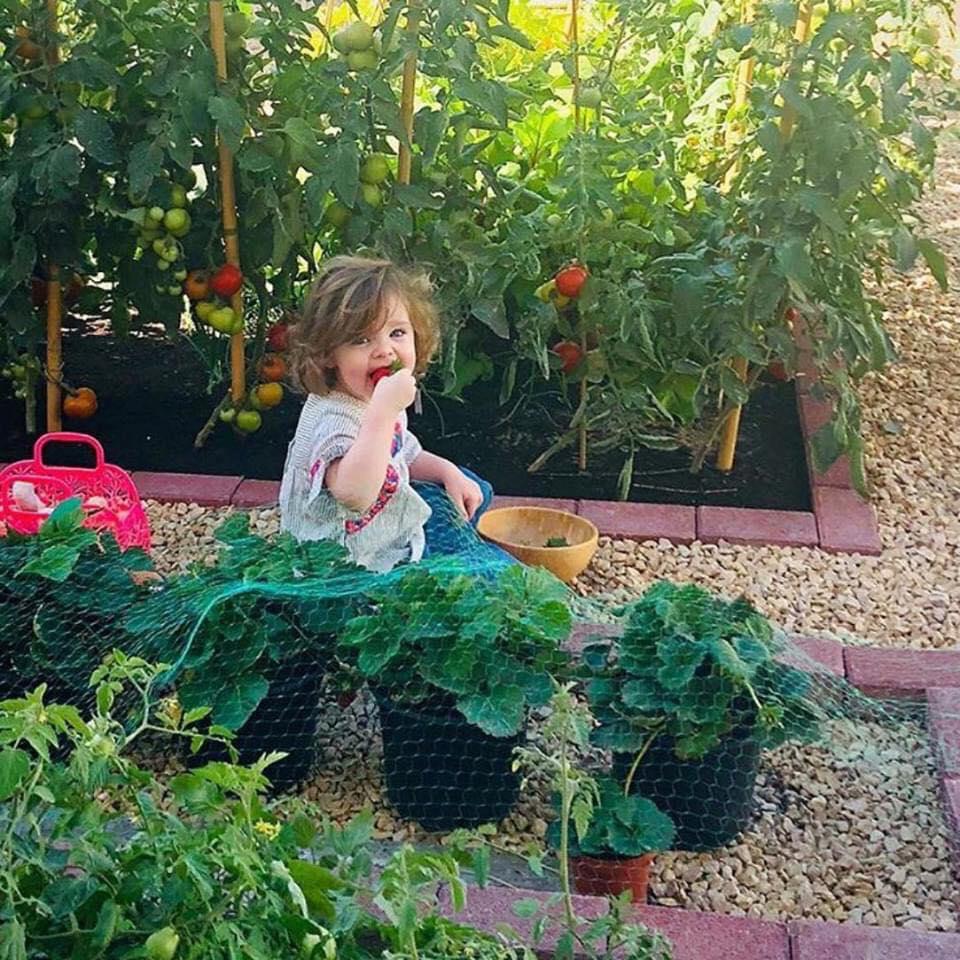 Vườn rau quả xanh um tươi tốt bố mẹ trồng giúp con gái nhỏ học nhiều điều về cuộc sống - Ảnh 14.