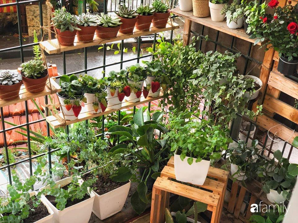 Cải tạo ban công tập thể chỉ 6m² thành vườn cây cùng góc thư giãn tuyệt đẹp cho gia đình ở Hà Nội - Ảnh 6.