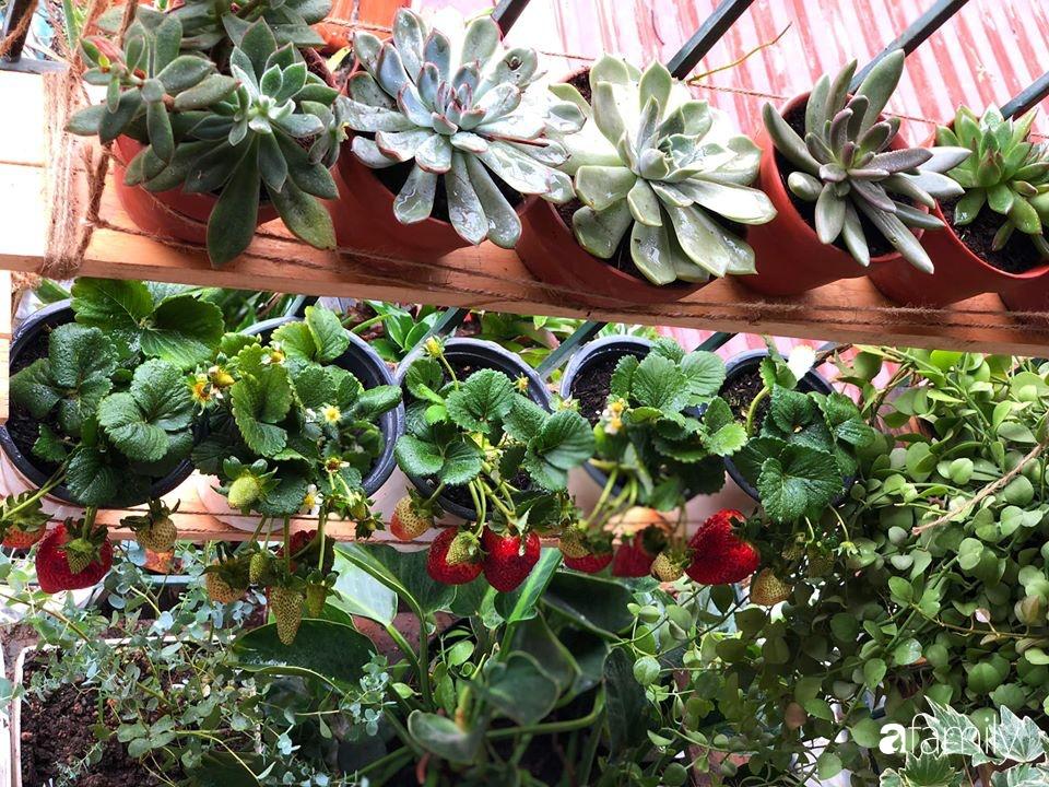 Cải tạo ban công tập thể chỉ 6m² thành vườn cây cùng góc thư giãn tuyệt đẹp cho gia đình ở Hà Nội - Ảnh 5.