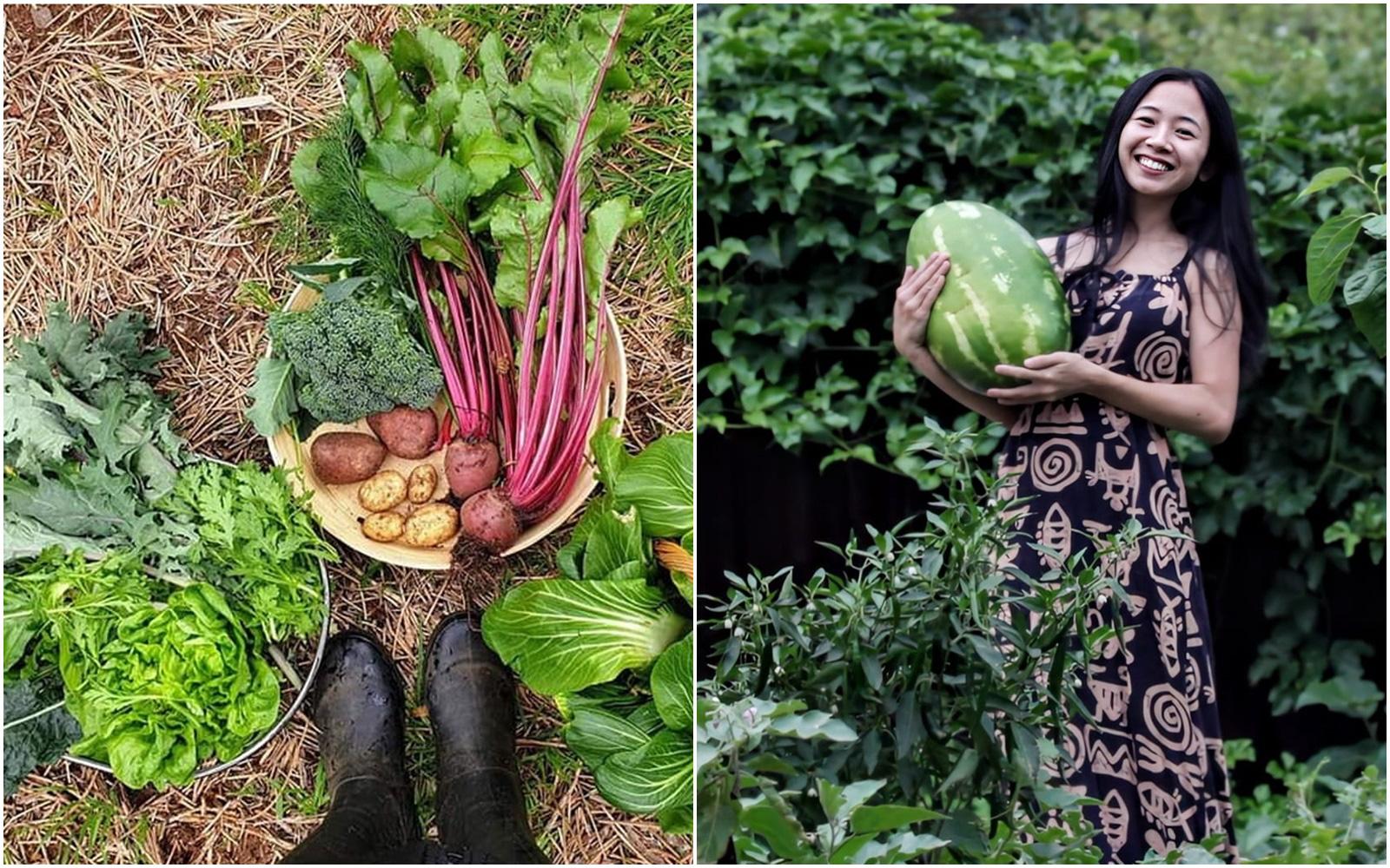 Nàng dâu Việt chia sẻ kinh nghiệm làm vườn hữu cơ từ A đến Z