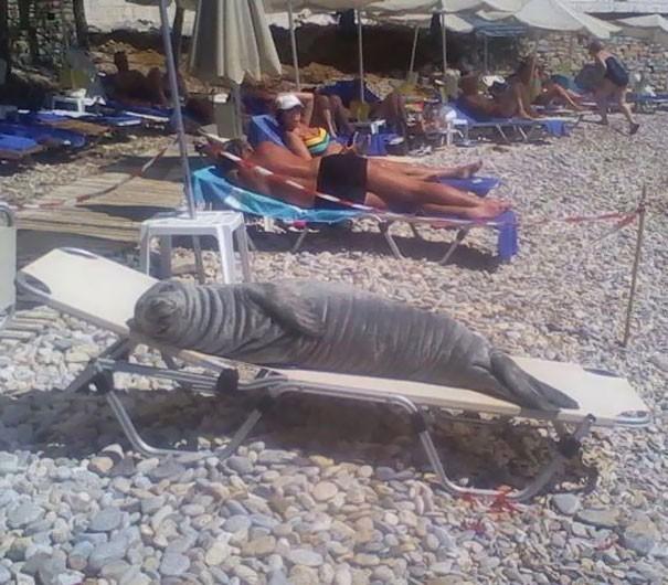 Loạt ảnh cho thấy bãi biển cũng có lắm thứ kỳ cục, số 3 sẽ khiến nhiều anh đỏ mặt vì xấu hổ - Ảnh 1.