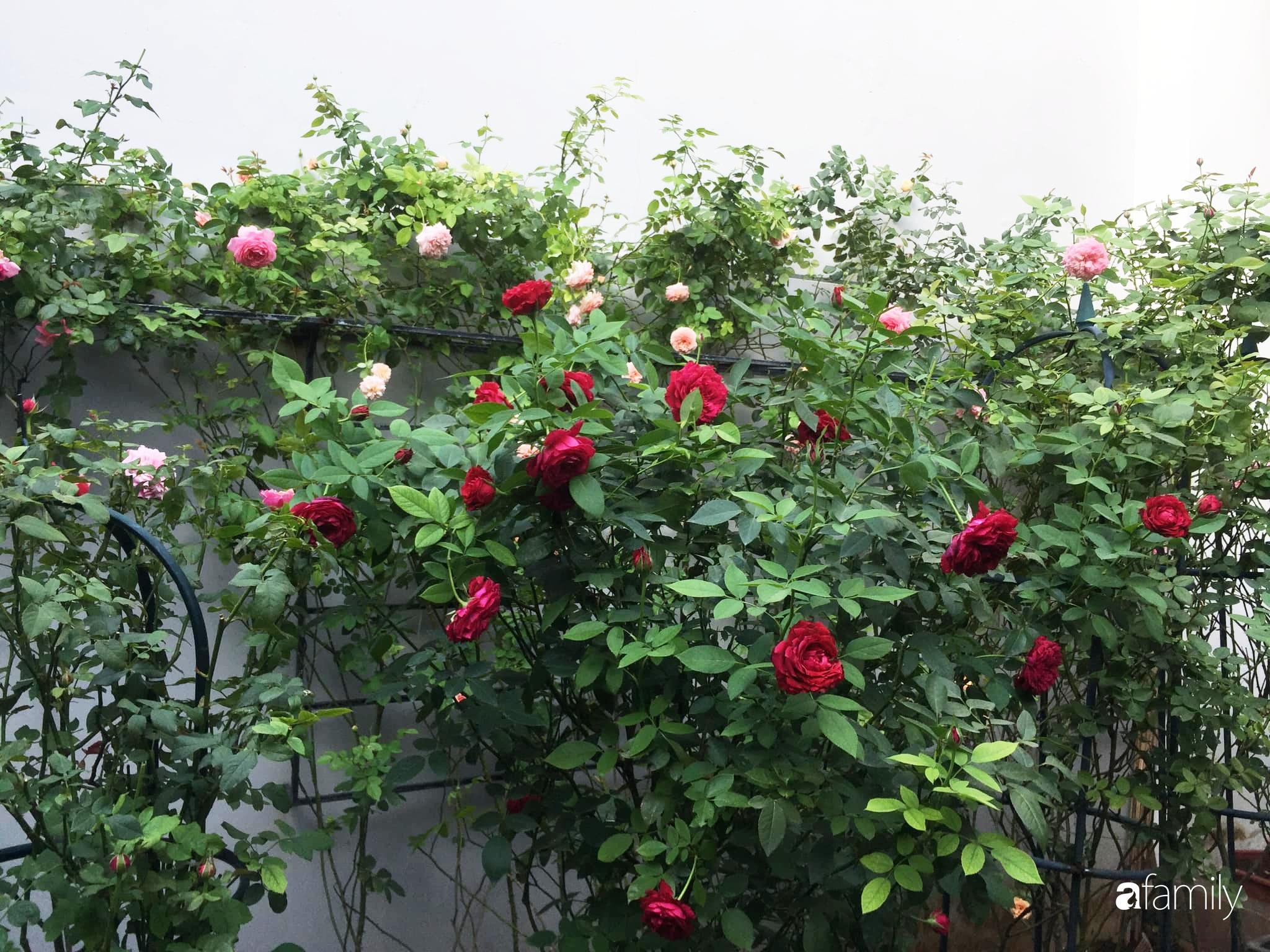 Lối nhỏ vào nhà níu chân bởi những gốc hồng xanh mướt lá rực rỡ sắc hoa ở Sài Gòn - Ảnh 11.