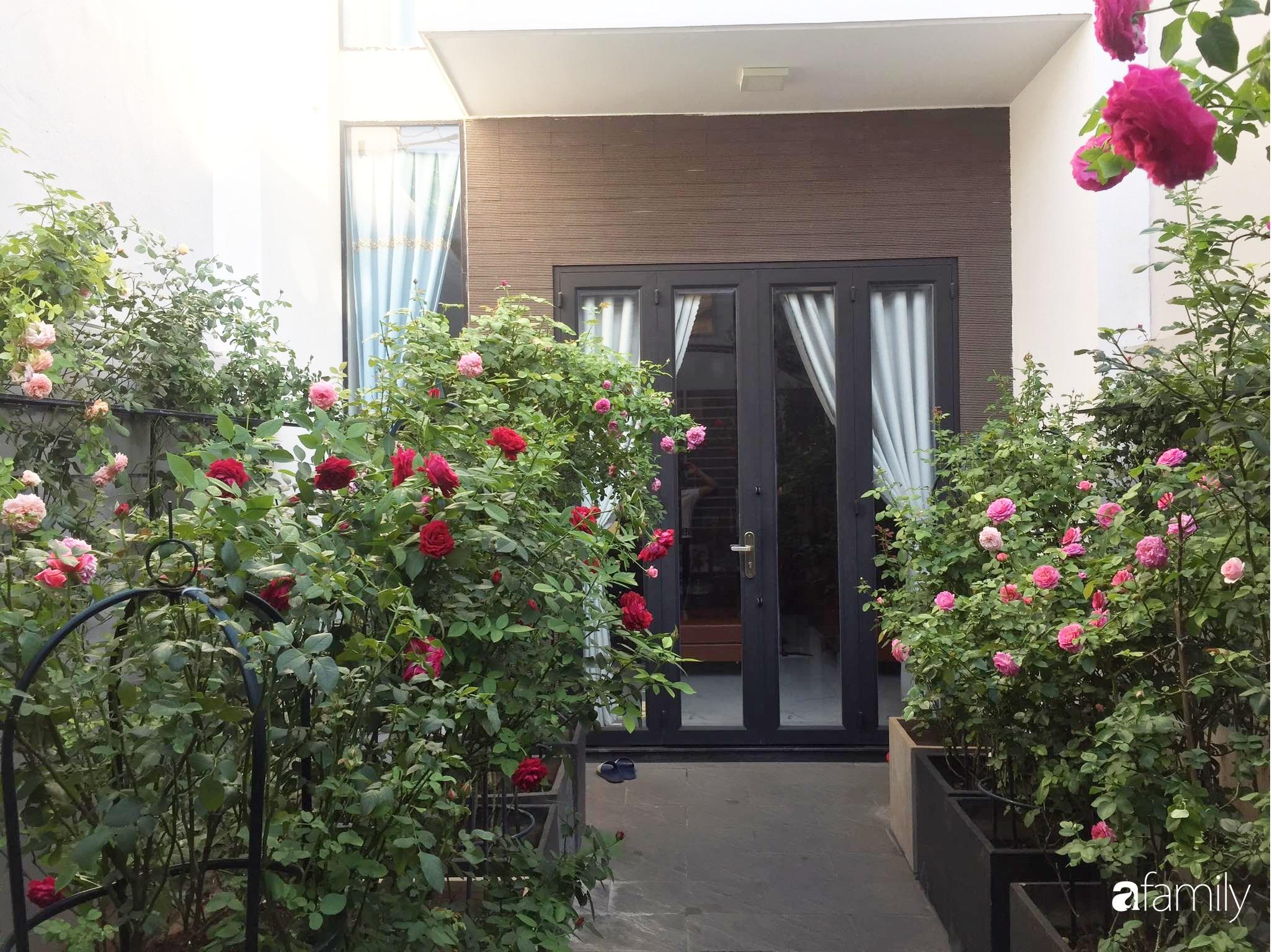 Lối nhỏ vào nhà níu chân bởi những gốc hồng xanh mướt lá rực rỡ sắc hoa ở Sài Gòn - Ảnh 4.