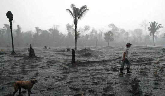 Trong khi cả thế giới gồng mình chống dịch bệnh, rừng Amazon cũng đang phải chịu sự tàn phá nặng nề do chính con người gây ra - Ảnh 2.
