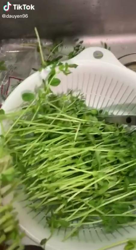 """2 cách trồng rau mầm tại nhà: Sử dụng khăn giấy rất đơn giản, nhưng tiết kiệm nhất là cách """"tái chế"""", ăn xong trồng lại - Ảnh 10."""