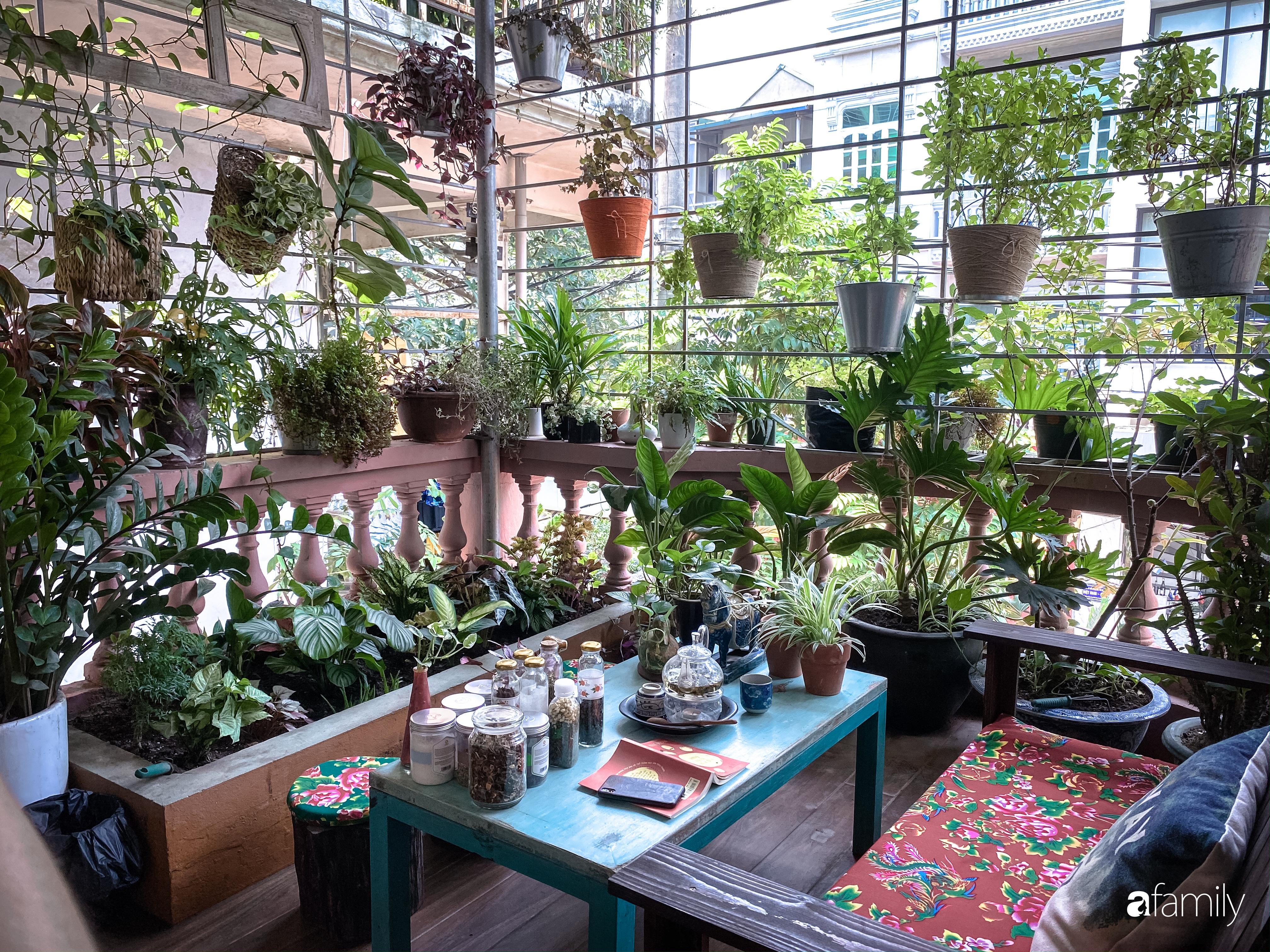 """Kinh nghiệm trồng cả """"rừng cây"""" tươi tốt xanh mát trong nhà của chàng trai Hà Nội - Ảnh 1."""