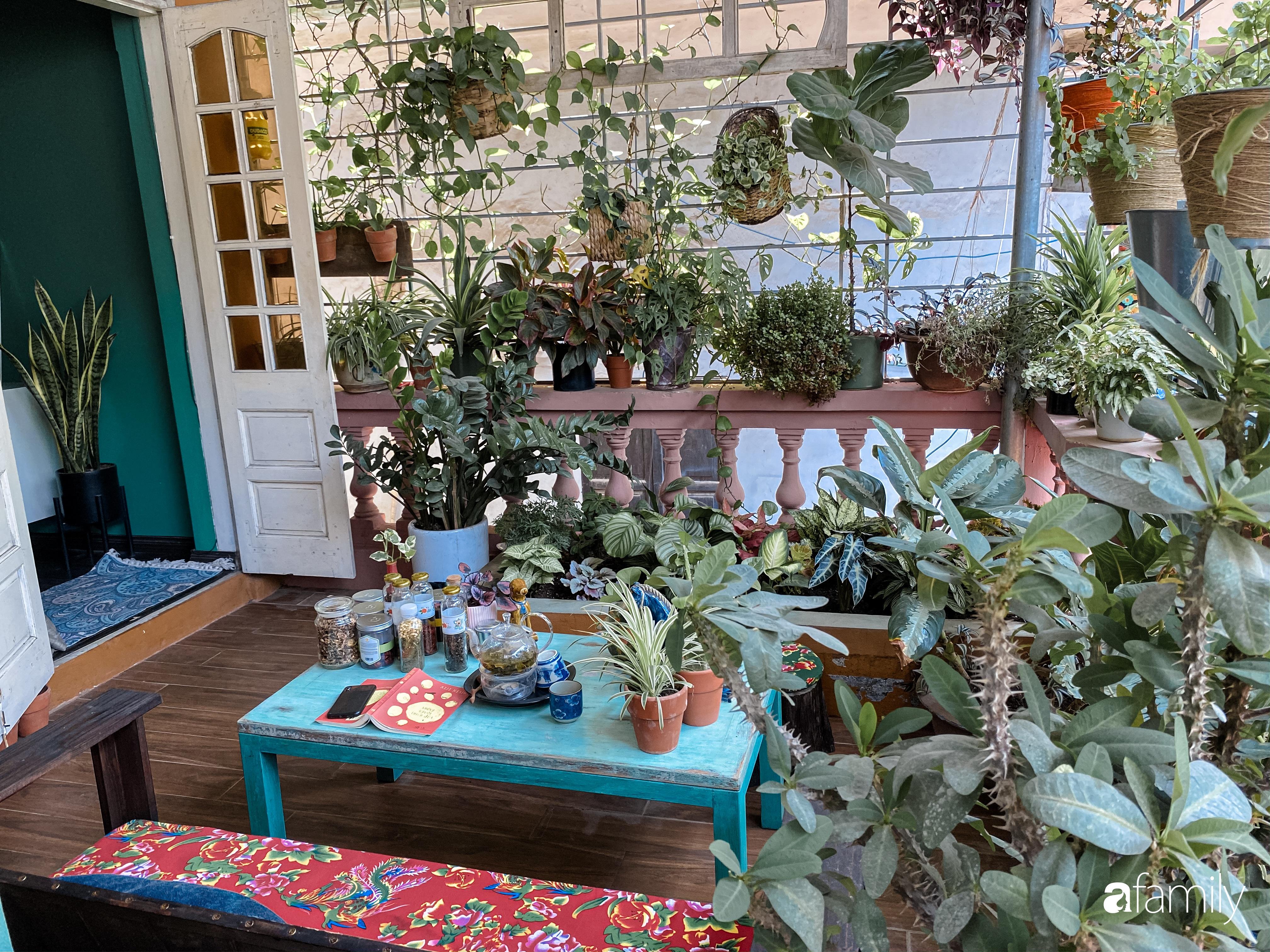"""Kinh nghiệm trồng cả """"rừng cây"""" tươi tốt xanh mát trong nhà của chàng trai Hà Nội - Ảnh 7."""