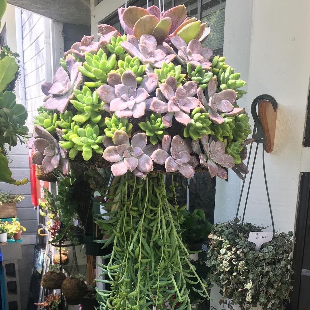 Khám phá xu hướng trồng cây mọng nước trang trí nhà thêm đẹp