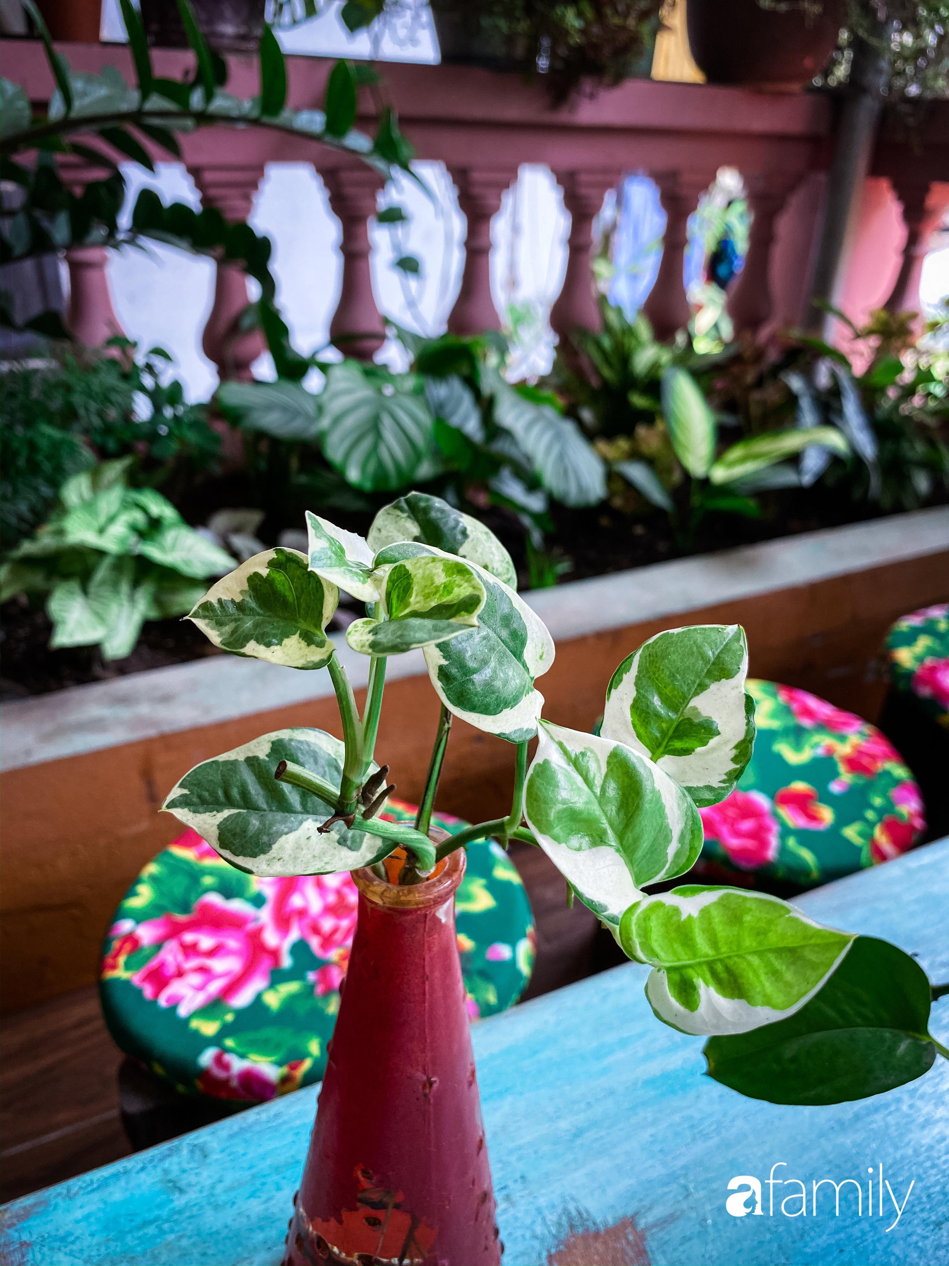 """Kinh nghiệm trồng cả """"rừng cây"""" tươi tốt xanh mát trong nhà của chàng trai Hà Nội - Ảnh 14."""