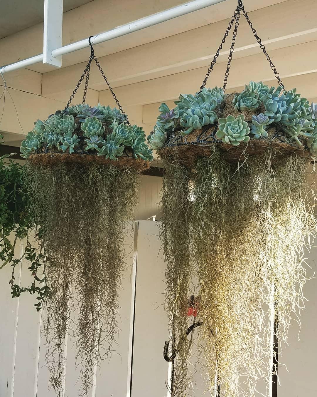 Khám phá xu hướng trồng cây mọng nước hình con sứa khiến cộng đồng mạng điên đảo - Ảnh 7.