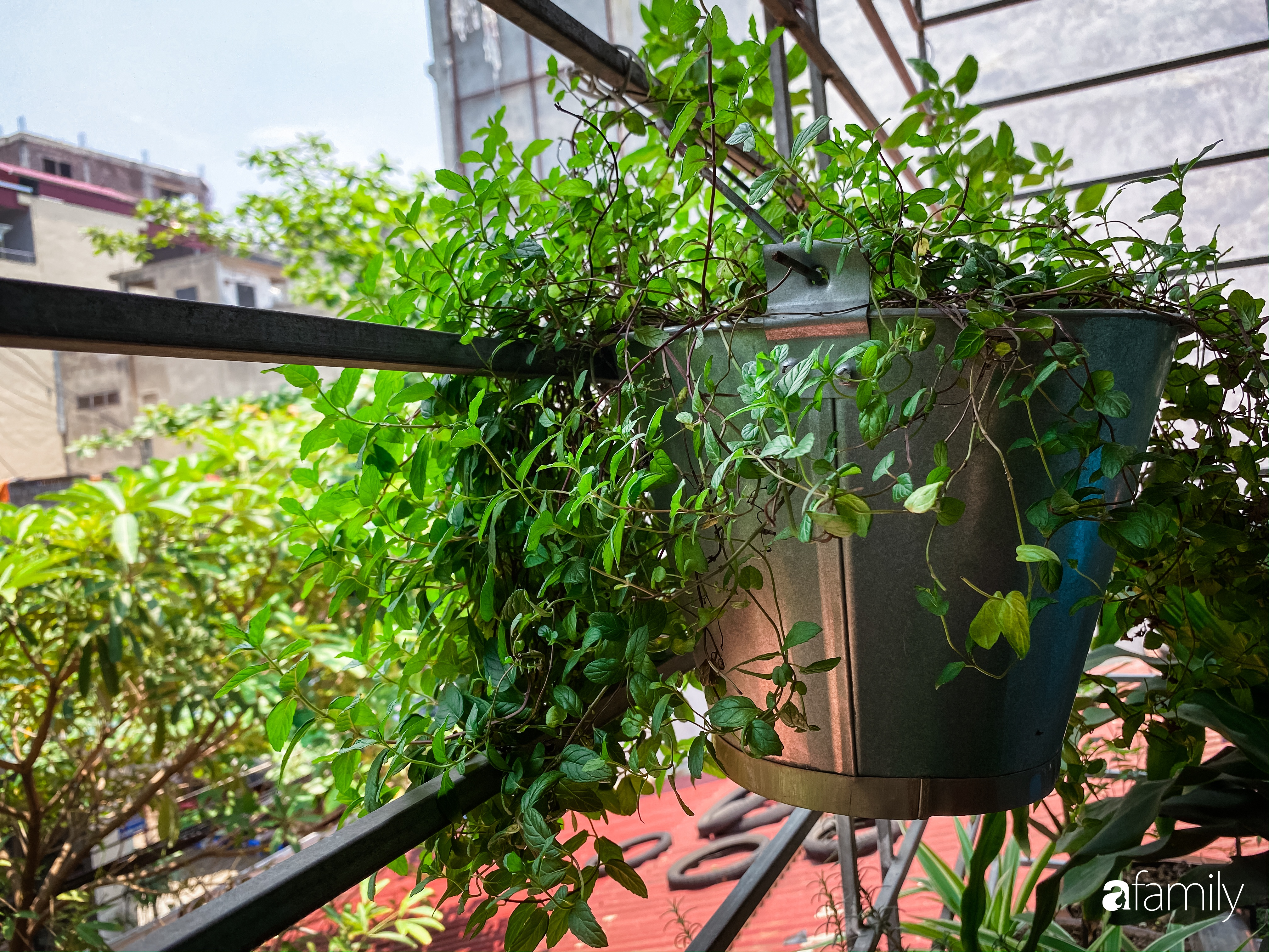 """Kinh nghiệm trồng cả """"rừng cây"""" tươi tốt xanh mát trong nhà của chàng trai Hà Nội - Ảnh 11."""