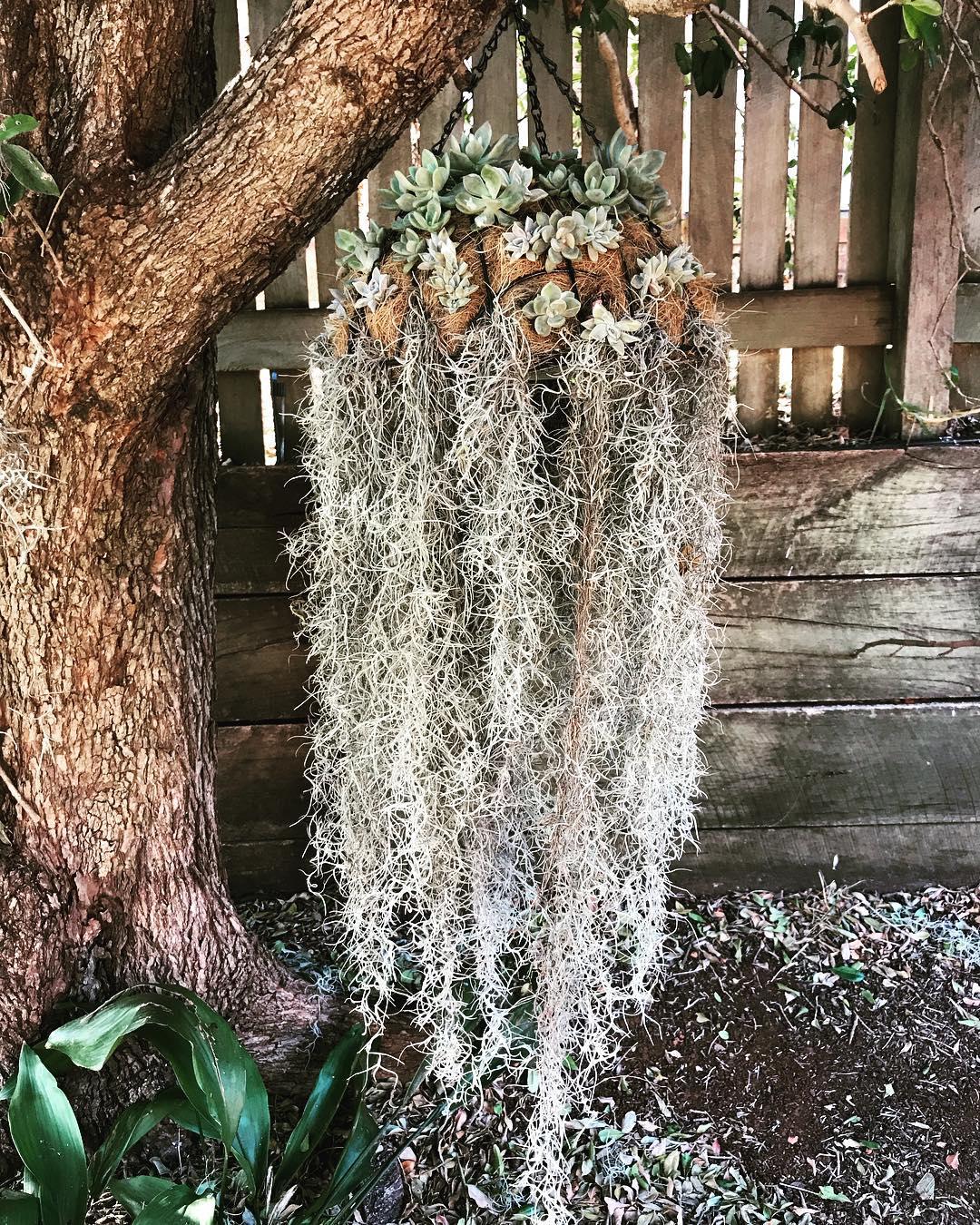 Khám phá xu hướng trồng cây mọng nước hình con sứa khiến cộng đồng mạng điên đảo - Ảnh 8.