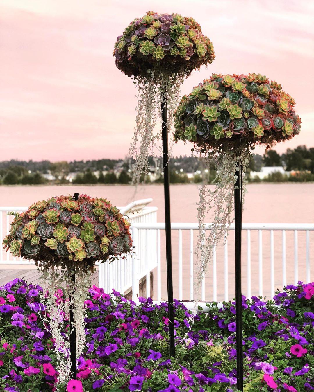 Khám phá xu hướng trồng cây mọng nước hình con sứa khiến cộng đồng mạng điên đảo - Ảnh 10.