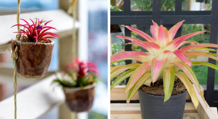 Gợi ý những loại cây trồng vừa đẹp nhà vừa tốt cho sức khỏe - Ảnh 11.
