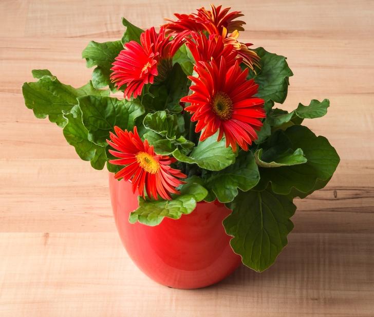 Gợi ý những loại cây trồng vừa đẹp nhà vừa tốt cho sức khỏe - Ảnh 12.