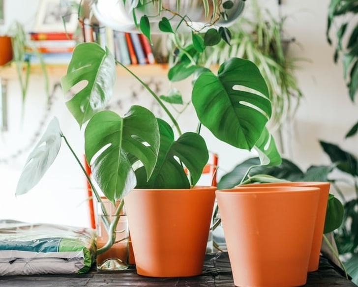 Gợi ý những loại cây trồng vừa đẹp nhà vừa tốt cho sức khỏe - Ảnh 15.