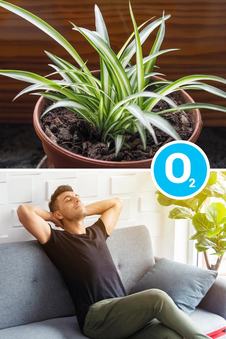Gợi ý những loại cây trồng vừa đẹp nhà vừa tốt cho sức khỏe - Ảnh 2.