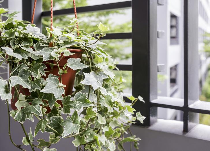 Gợi ý những loại cây trồng vừa đẹp nhà vừa tốt cho sức khỏe - Ảnh 6.