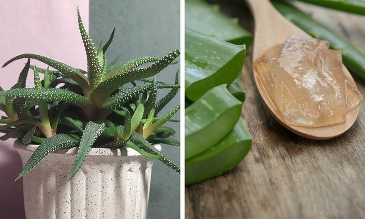 Gợi ý những loại cây trồng vừa đẹp nhà vừa tốt cho sức khỏe - Ảnh 8.