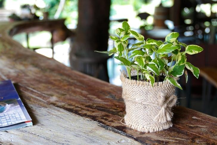 Gợi ý những loại cây trồng vừa đẹp nhà vừa tốt cho sức khỏe - Ảnh 9.