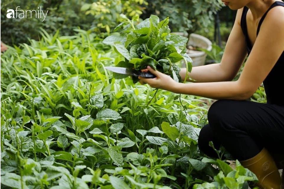 """Nghe kinh nghiệm trồng """"vườn treo Babylon"""" ngay giữa lòng thành phố đã 10 năm vẫn tốt xanh um của bà  Hà Nội - Ảnh 4."""