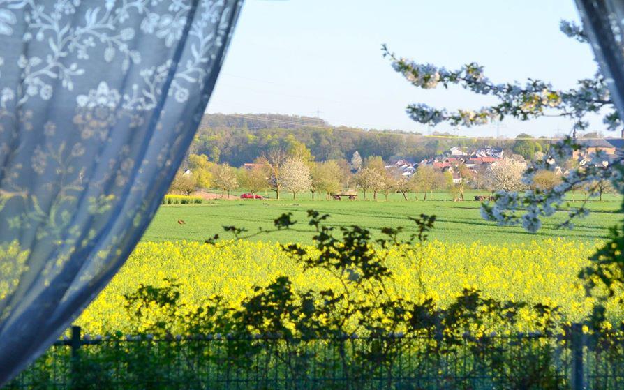 Ngắm ngôi nhà vườn đẹp như mơ, có không gian sống gần gũi thiên nhiên