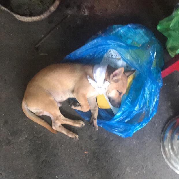 Chủ qua đời, chú chó bỏ ăn nằm phục trông coi linh cữu rồi mất ngay sau tang lễ - Ảnh 7.