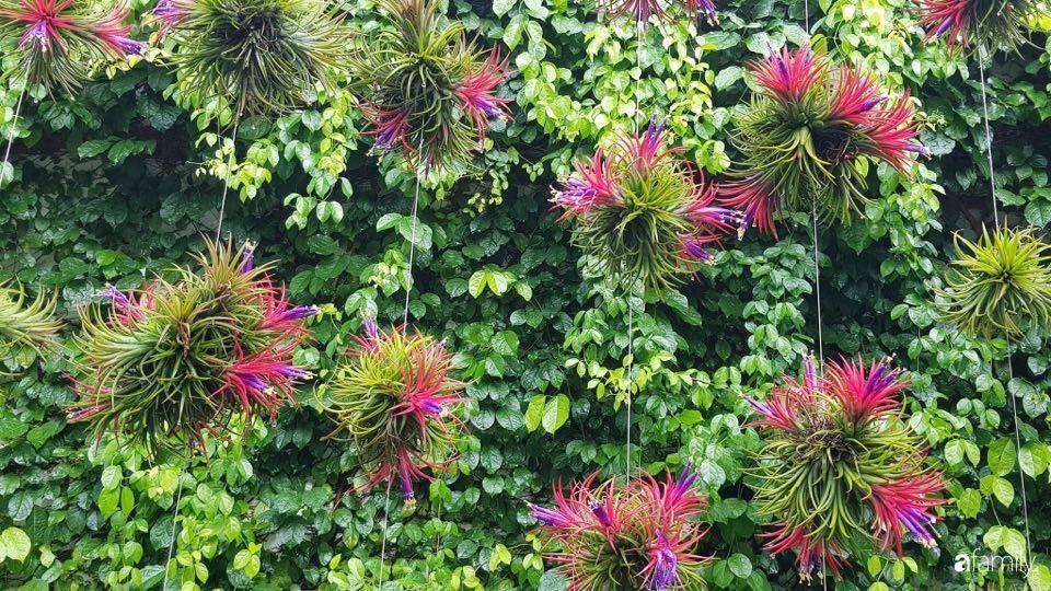 Ngất ngây ngắm nhìn khu vườn toàn những cây độc lạ của người phụ nữ yêu thiên nhiên ở Cần Thơ - Ảnh 3.