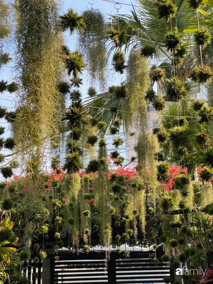 Ngất ngây ngắm nhìn khu vườn toàn những cây độc lạ của người phụ nữ yêu thiên nhiên ở Cần Thơ - Ảnh 10.