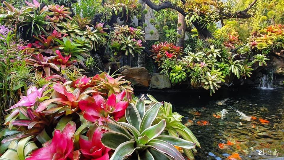 Ngất ngây ngắm nhìn khu vườn toàn những cây độc lạ của người phụ nữ yêu thiên nhiên ở Cần Thơ - Ảnh 2.