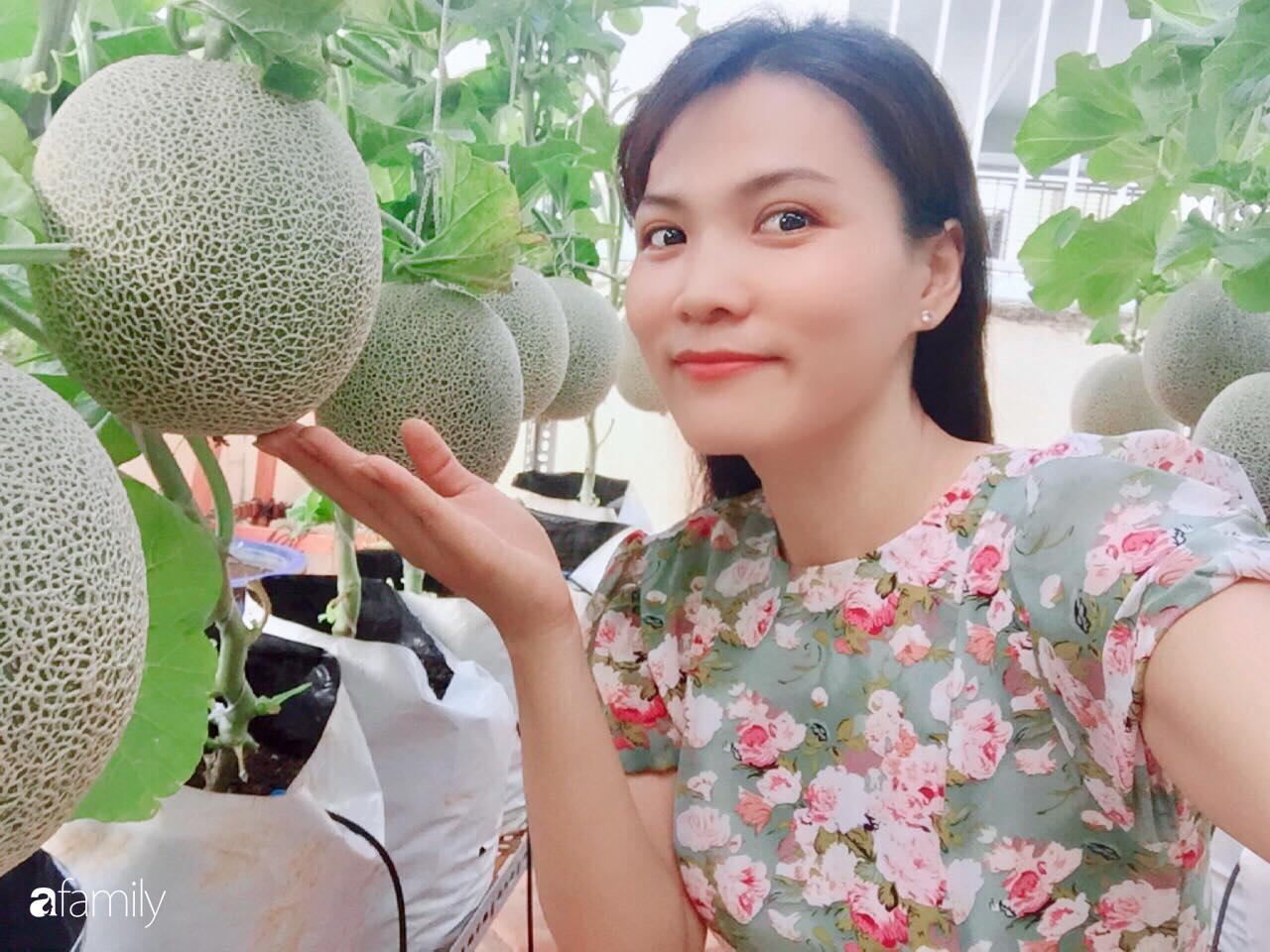 """Gặp """"siêu nhân"""" trồng dưa trên sân thượng với kinh nghiệm đáng ngưỡng mộ ở Sài Gòn - Ảnh 1."""