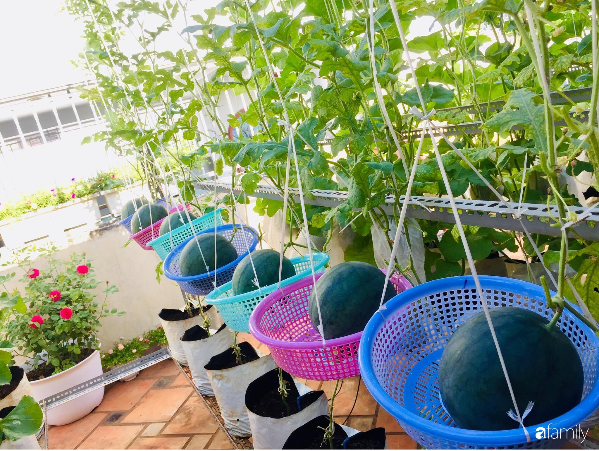 """Gặp """"siêu nhân"""" trồng dưa trên sân thượng với kinh nghiệm đáng ngưỡng mộ ở Sài Gòn - Ảnh 4."""