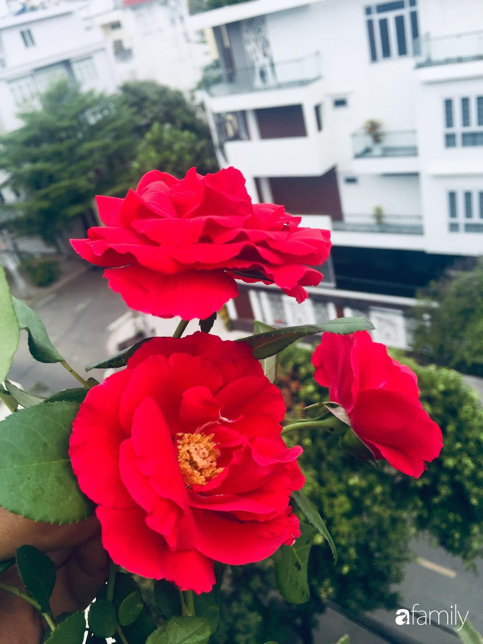 """Gặp """"siêu nhân"""" trồng dưa trên sân thượng với kinh nghiệm đáng ngưỡng mộ ở Sài Gòn - Ảnh 15."""