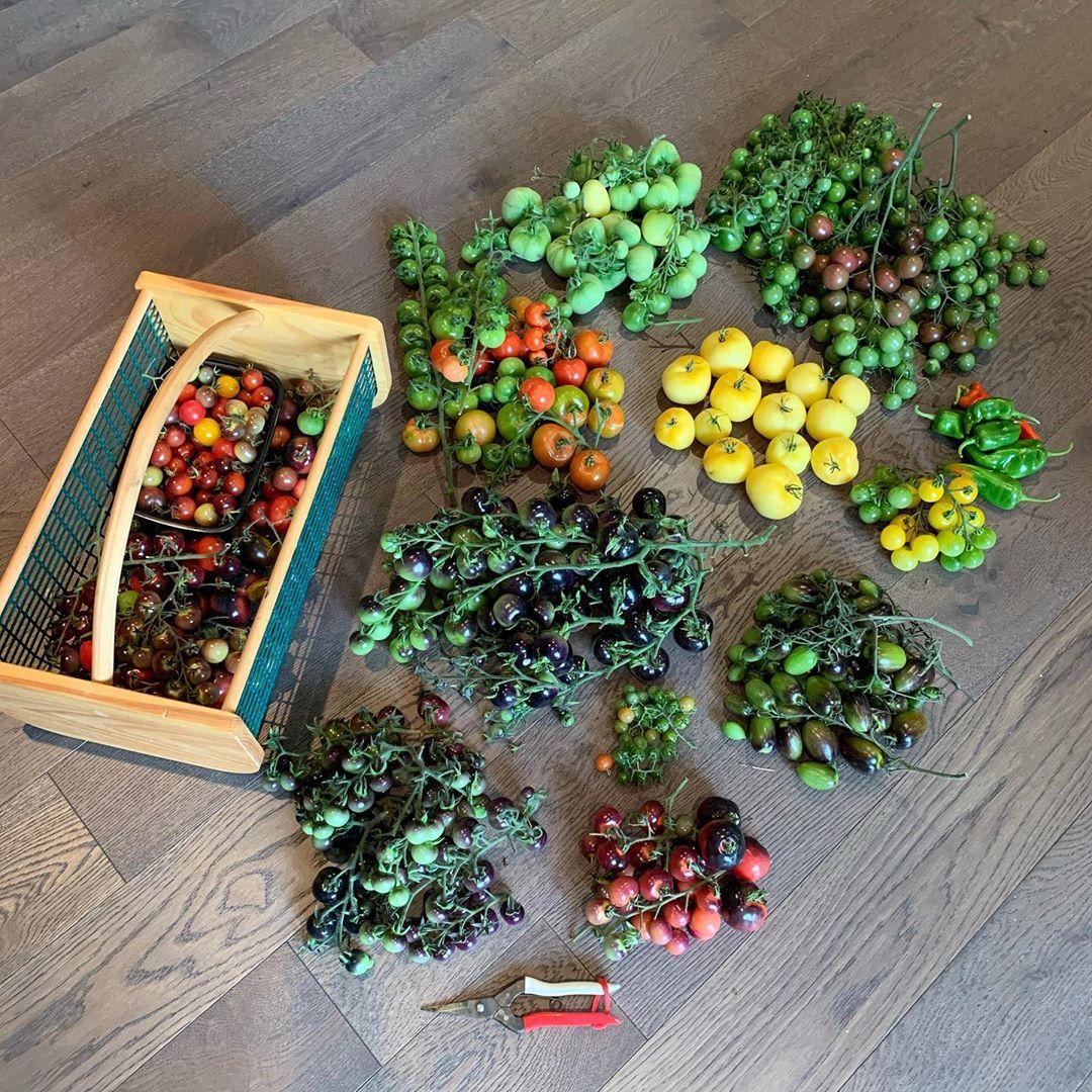 Người mẹ trẻ học cách trồng thực phẩm sạch tại nhà từ khi có dịch Covid 19 - Ảnh 10.