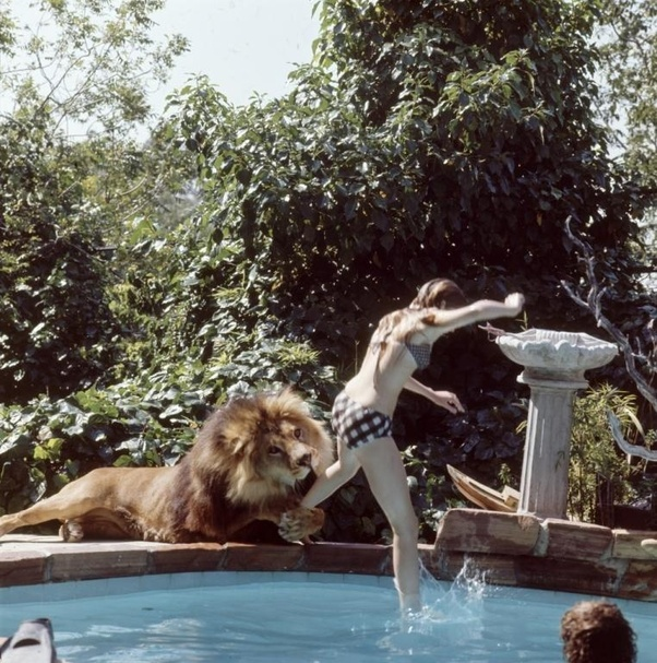 Bức ảnh con sư tử tấn công cô gái trẻ ngỡ là khoảnh khắc kinh hoàng cuối cùng của nạn nhân nhưng sự thật trái ngược hoàn toàn - Ảnh 1.