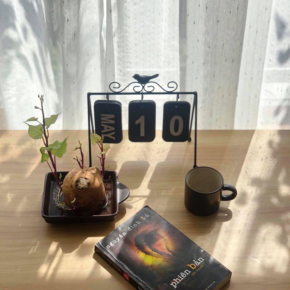 """""""Nâng tầm"""" cây khoai lang lên thành bonsai sang chảnh nhờ trồng vào những loại bình này - Ảnh 3."""