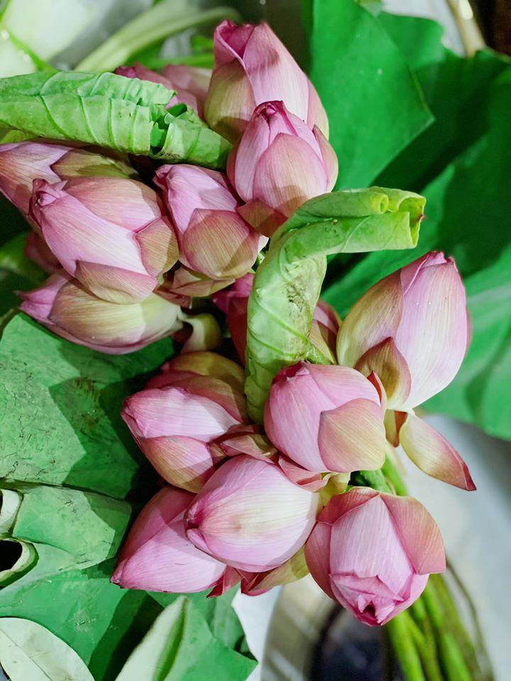Mùa sen về, nếu còn nhầm lẫn tai hại giữa hoa sen & hoa quỳ khi mua, chị em hãy thuộc lòng 7 bí quyết sau! - Ảnh 9.