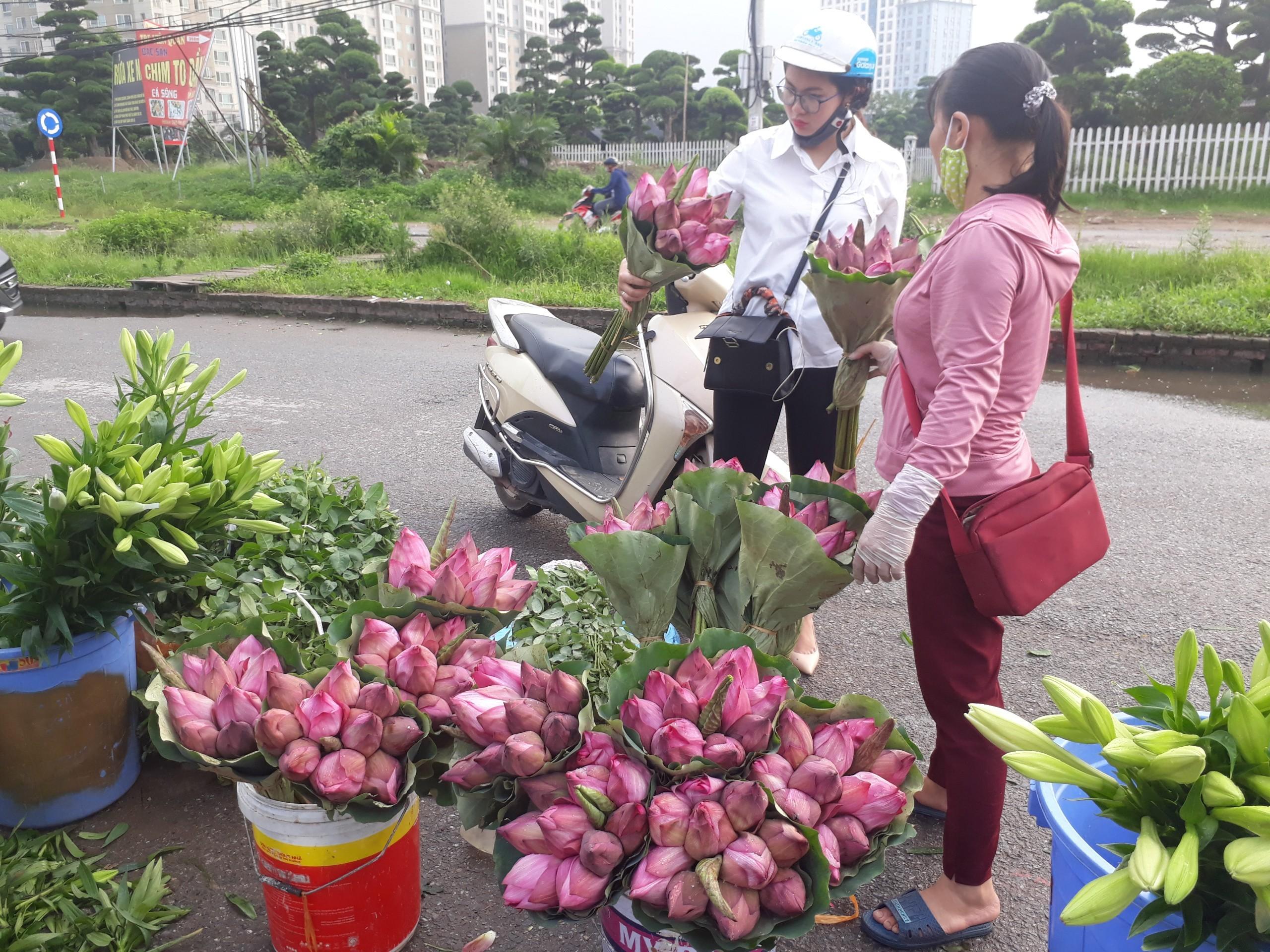 Mùa sen về, nếu còn nhầm lẫn tai hại giữa hoa sen & hoa quỳ khi mua, chị em hãy thuộc lòng 7 bí quyết sau! - Ảnh 3.