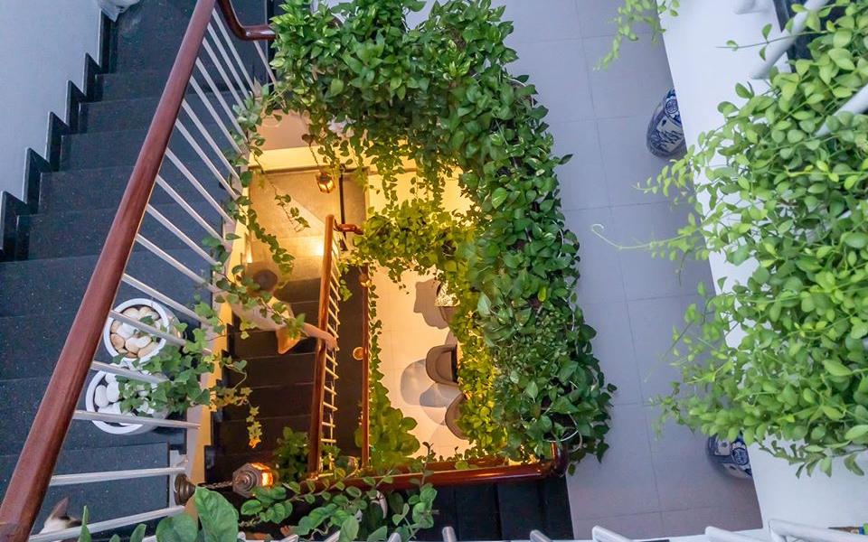 Căn nhà ống 20m² cực chill và không gian xanh mát với chi phí 20 triệu đồng mua cây xanh