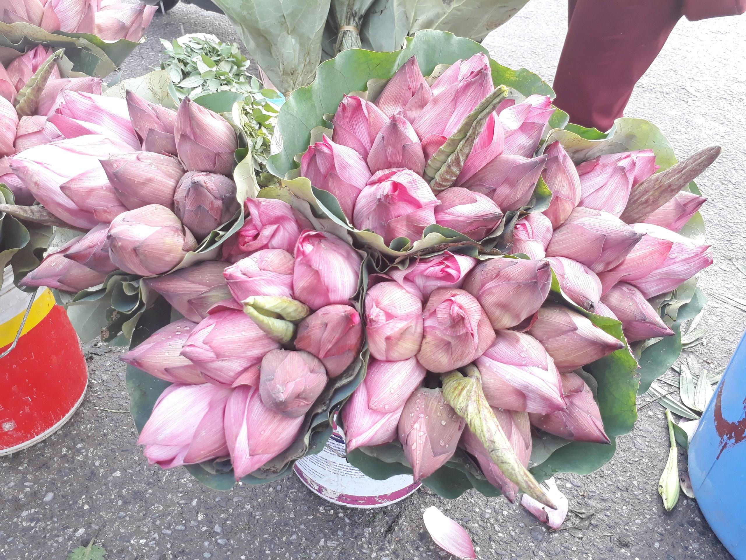 Mùa sen về, nếu còn nhầm lẫn tai hại giữa hoa sen & hoa quỳ khi mua, chị em hãy thuộc lòng 7 bí quyết sau! - Ảnh 5.