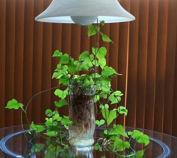 """""""Nâng tầm"""" cây khoai lang lên thành bonsai sang chảnh nhờ trồng vào những loại bình này - Ảnh 1."""