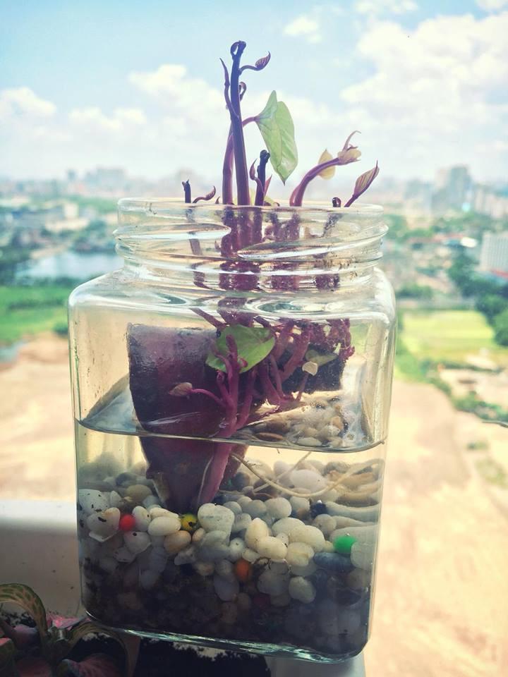 """""""Nâng tầm"""" cây khoai lang lên thành bonsai sang chảnh nhờ trồng vào những loại bình này - Ảnh 5."""