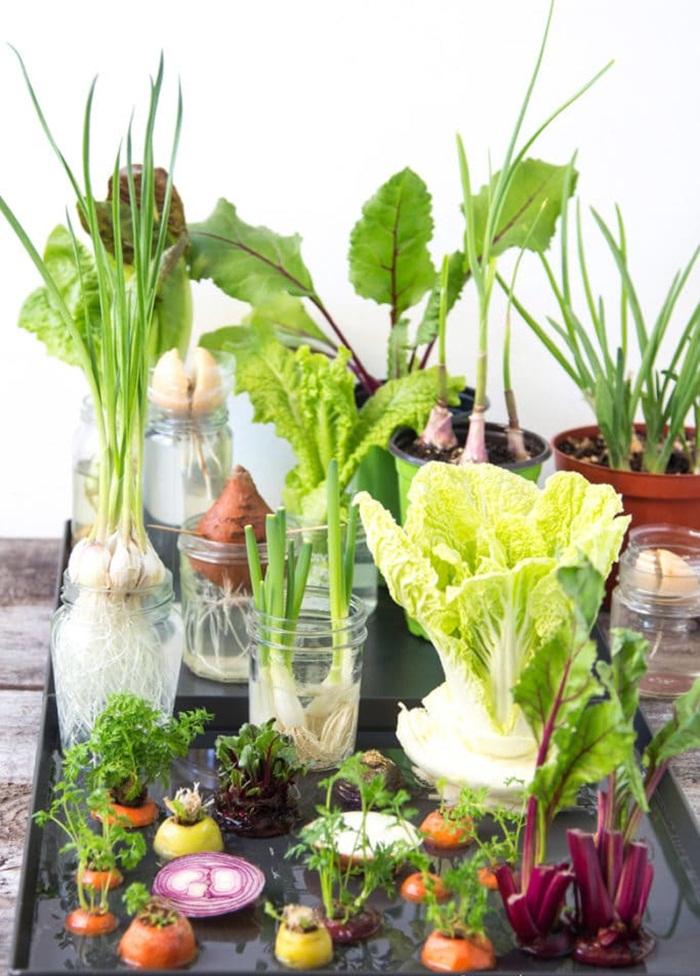 Tự trồng vườn rau gia vị nơi góc bếp, tại sao không nhỉ? - ảnh 2