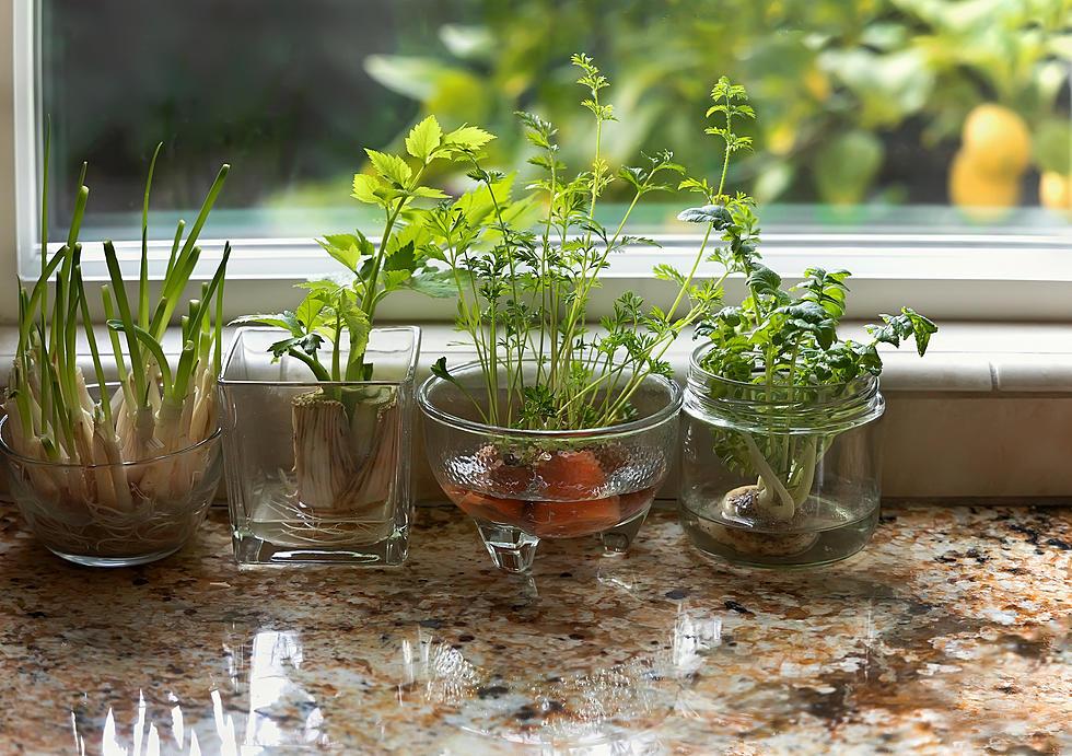 Tự trồng vườn rau gia vị nơi góc bếp, tại sao không nhỉ? - ảnh 21